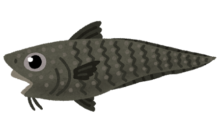 fish_ibarahige.png